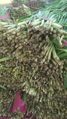 这是一张关于紫根韭菜 二茬 35~40cm 的产品图片