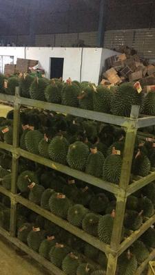 广西壮族自治区崇左市凭祥市巴掌榴莲 2 - 3公斤 30 - 40%以上