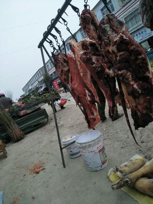 湖北省襄阳市襄州区牛肉类 生肉