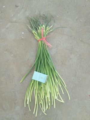 山东省济宁市金乡县金乡红帽蒜苔 60~70cm