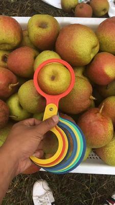 这是一张关于红梨 80mm以上 250-300g 的产品图片