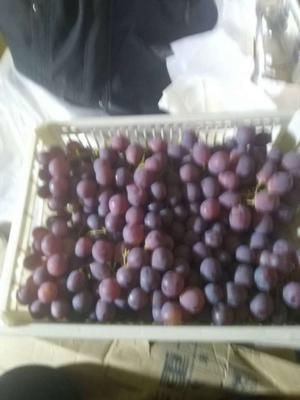 新疆维吾尔自治区乌鲁木齐市米东区红提 2斤以上 5%以下 1次果