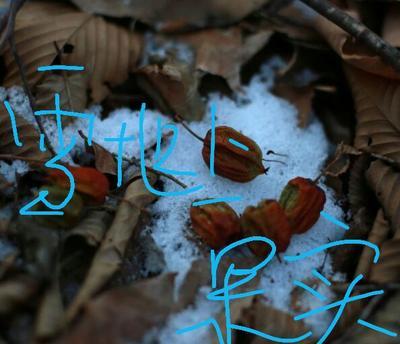 这是一张关于纯野生绿色有机猕猴桃 50克以下 的产品图片