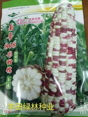 福建省漳州市南靖县甜糯玉米种子 ≥90% 单交种