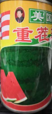 河南省南阳市卧龙区美国重茬王 三倍体杂交种 ≥90%