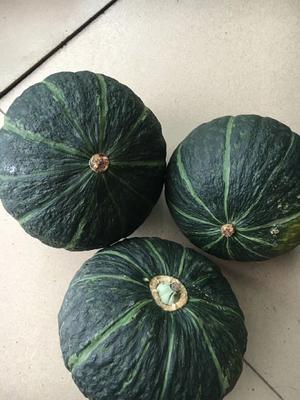 甘肃省酒泉市肃州区甘栗南瓜种子  95% 铁球子