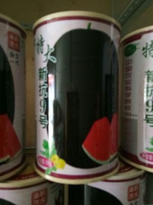 河南省郑州市金水区黑皮西瓜种子 二倍体杂交种 ≥85%