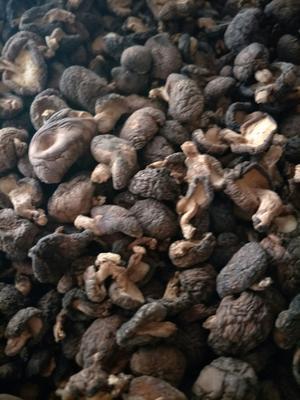 四川省达州市万源市原木干香菇 散装 半年