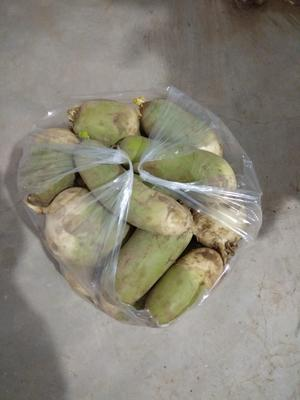 河南省信阳市浉河区青头白萝卜 1~1.5斤