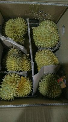 广西壮族自治区崇左市凭祥市干荛榴莲 2 - 3公斤 90%以上