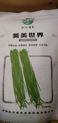 河南省周口市扶沟县油青豆角种子 ≥97%
