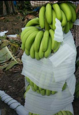 云南省红河哈尼族彝族自治州金平苗族瑶族傣族自治县金平香蕉 七成熟