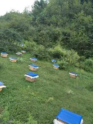 贵州省贵阳市花溪区中华蜜蜂