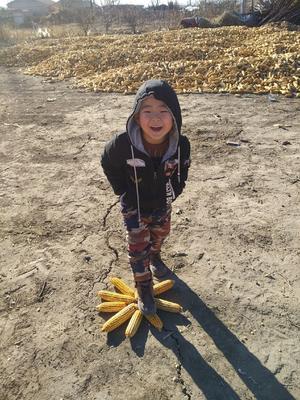 吉林省长春市农安县混合玉米粒 杂质很少 水份<14%