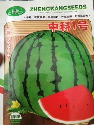 河南省郑州市金水区花皮西瓜种子 二倍体杂交种 ≥85%