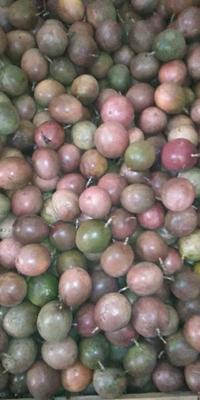 广西壮族自治区贺州市八步区紫香一号百香果 60 - 70克