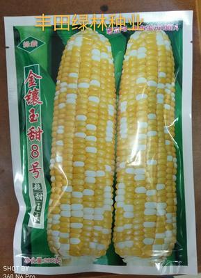 福建省漳州市南靖县开元棋牌平台玉米种子 ≥90% 单交种