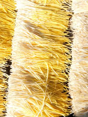 安徽省宿州市萧县黄金韭  头茬 40~50cm 绿色建康无公害