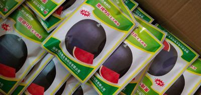 河南省周口市扶沟县黑神98无籽西瓜种子 三倍体杂交种 ≥85%