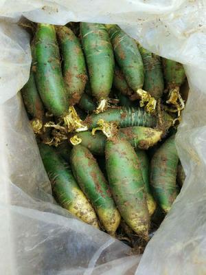 安徽省宿州市萧县青萝卜 混装通货