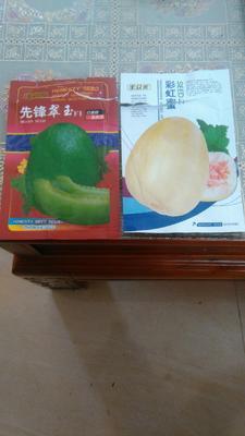 广东省汕尾市陆丰市脆皮香瓜 0.5斤以上