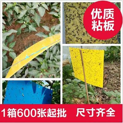 山东省潍坊市寿光市诱虫板 双面进口胶加厚粘虫板