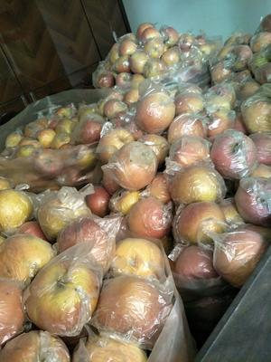 陕西省咸阳市礼泉县红富士苹果 85mm以上 全红 膜袋
