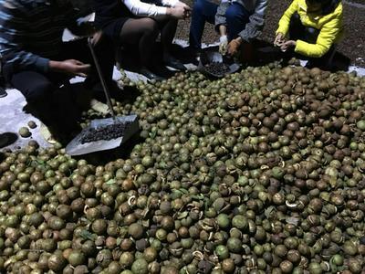 广西壮族自治区玉林市北流市野生山茶油