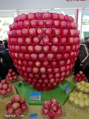 陕西省宝鸡市扶风县红富士苹果 75mm以上 条红 纸+膜袋
