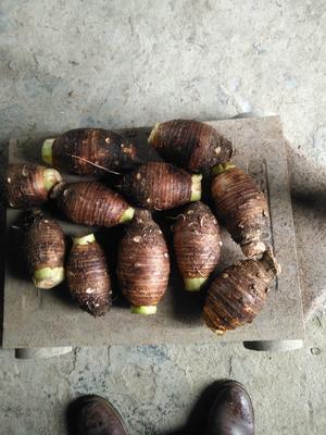 广西壮族自治区桂林市灌阳县荔浦芋头 6cm以上