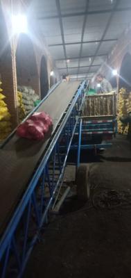吉林省四平市公主岭市红皮萝卜 1.5~2斤