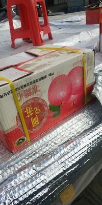 广东省广州市白云区红富士苹果 80mm以上 片红 光果
