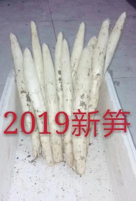 山东省潍坊市坊子区白芦笋 20~30cm