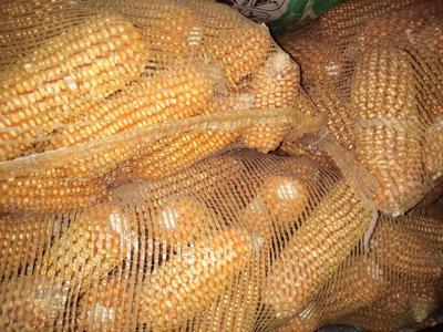 陕西省渭南市白水县杂交玉米粒 杂质很少 水份14%-16%