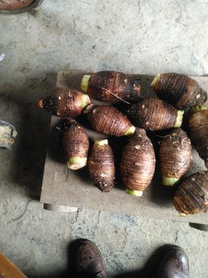 广西壮族自治区桂林市灌阳县荔浦芋头 5cm以上