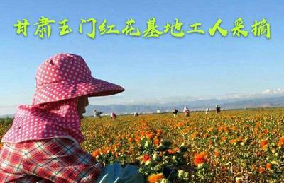 甘肃省酒泉市玉门市草红花