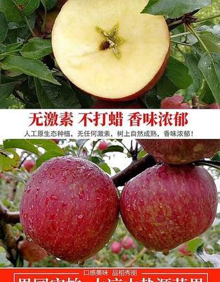四川省凉山彝族自治州盐源县盐源苹果 70mm以上 片红 光果