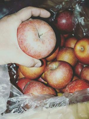 河北省石家庄市晋州市秦冠苹果 80mm以上 全红 光果