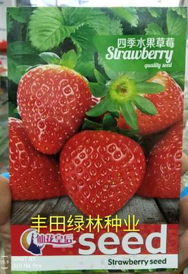 福建省漳州市南靖县草莓种子