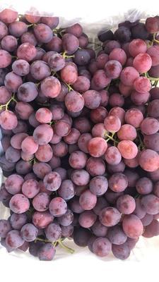 新疆维吾尔自治区乌鲁木齐市米东区红提 1.5- 2斤 5%以下 1次果