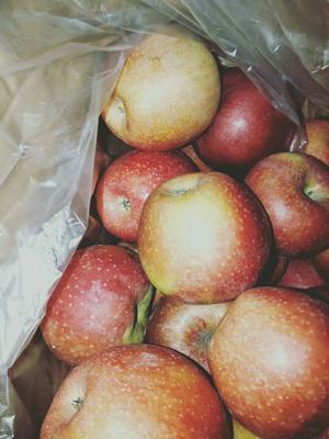 河北省石家庄市晋州市秦冠苹果 70mm以上 全红 光果