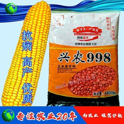 河北省石家庄市新华区兴农998 常规种 ≥95%