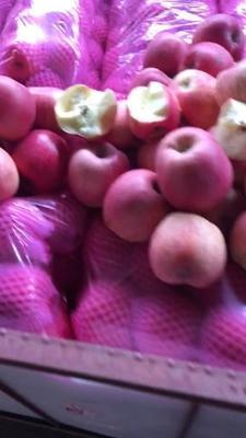山西省运城市临猗县红富士苹果 75mm以上 全红 纸袋