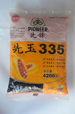 山东省济宁市兖州区甜玉米种子 常规种 ≥90%