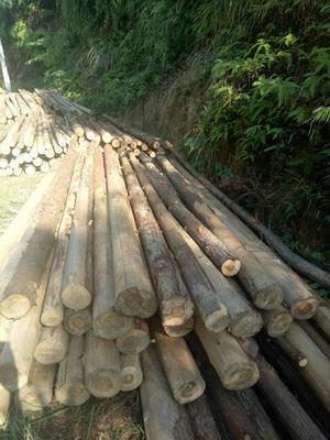 这是一张关于杉木 的产品图片