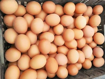 河南省郑州市新密市普通鸡蛋 食用 散装