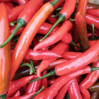 这是一张关于美人椒 5~10cm 中辣 红色 的产品图片