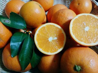 这是一张关于锦蜜冰糖橙 70-75mm 4-8两 的产品图片