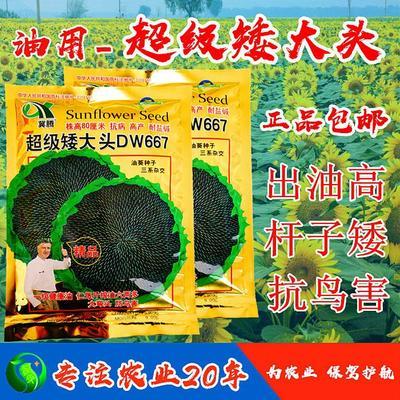 这是一张关于向日葵种子 常规种(大田用种) ≥95% 的产品图片