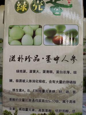 云南省昆明市宜良县绿壳鸡蛋 食用 礼盒装